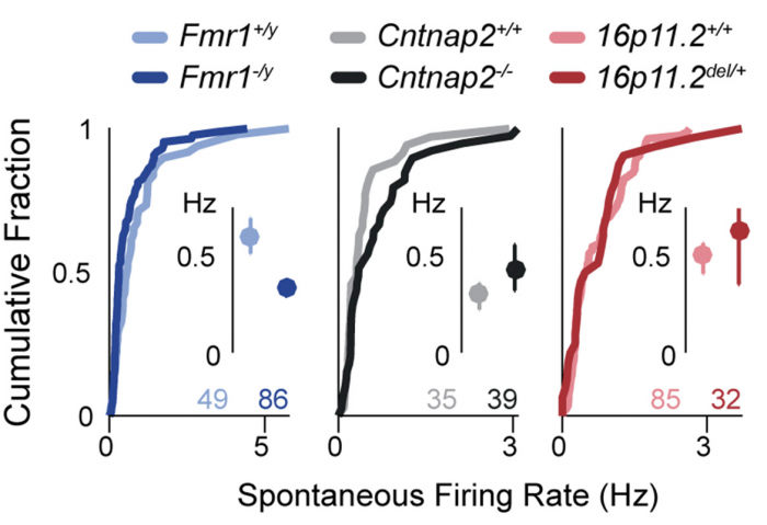 Autism May Reflect Excitation >> Sfari Alterations In Neuronal Excitability Are Compensatory