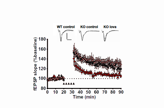 Mouse Model Yields Possible Treatment >> Sfari Brief Treatment With Statin Yields Long Term Benefit In Rat